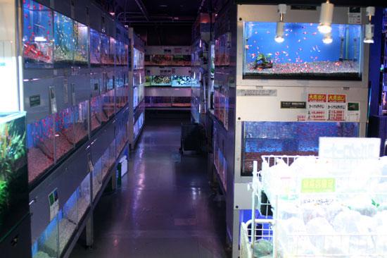 ショップ 熱帯魚 熱帯魚関連のことなら『ディスカウント アクア』