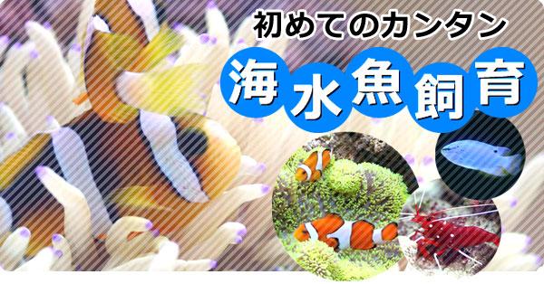 初めてのかんたん海水魚飼育